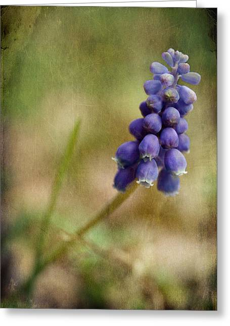 Blue Grapes Greeting Cards - Spring Delight Greeting Card by Michael Eingle