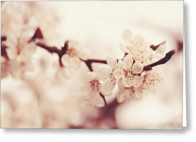 Inflorescence Greeting Cards - Spring Greeting Card by Diana Kraleva