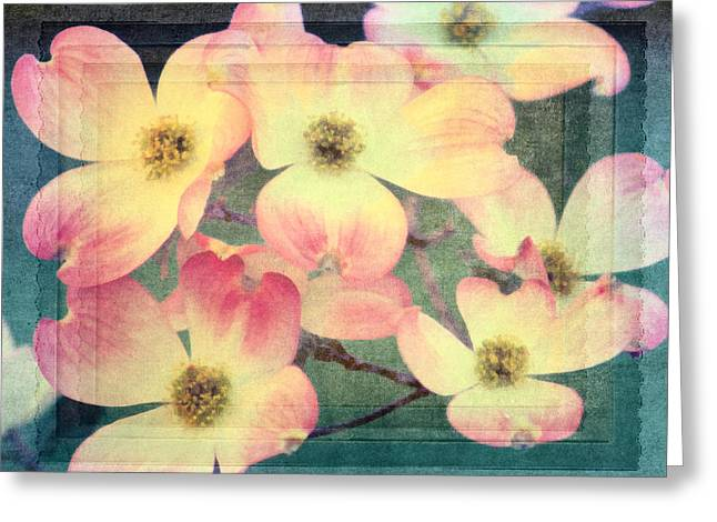 Florida Flowers Digital Greeting Cards - Spring Dogwood Greeting Card by Georgiana Romanovna