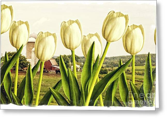 Tulip Blossom Greeting Cards - Spring Down on the Farm Greeting Card by Edward Fielding