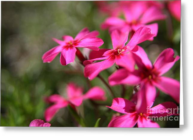 Neal Eslinger Photography Greeting Cards - Spring Dream  Greeting Card by Neal  Eslinger