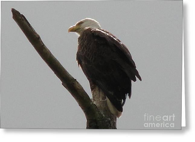 Spring Eagle X Greeting Card by Daniel Henning