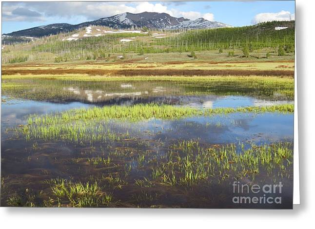 Gallatin River Greeting Cards - Spring Evening on the Gallatin Greeting Card by Harriet Peck Taylor
