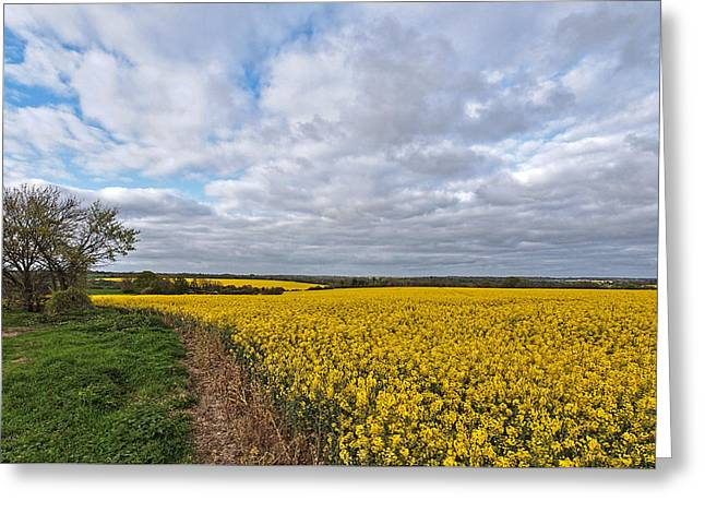 Open Field Greeting Cards - Spring Fields of Oilseed Rape Greeting Card by Gill Billington