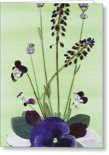 Johnny Jump Up Pansy Greeting Cards - Spring Fling Greeting Card by Kathie McCurdy
