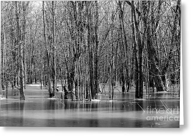 Flooding Greeting Cards - Spring Flooding Greeting Card by Sophie Vigneault