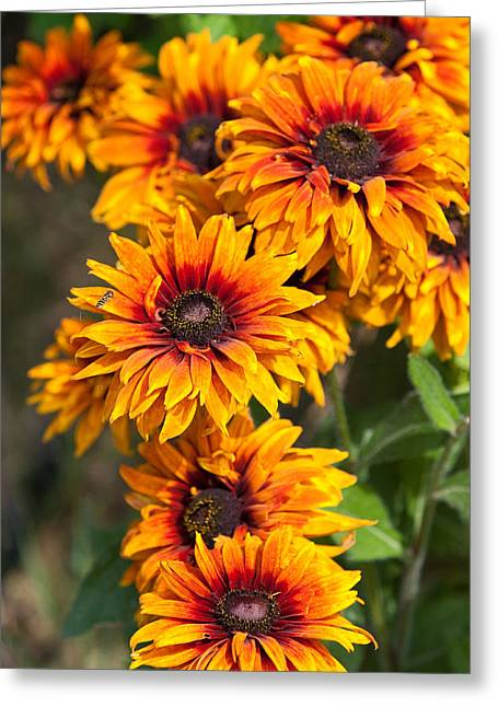 Coller Greeting Cards - Spring Flowers Greeting Card by Debbie Hamilton