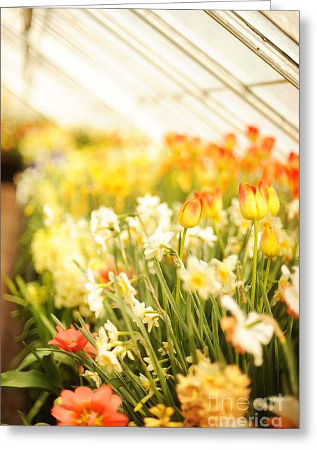 Garden Show Greeting Cards - Spring Flowers Greeting Card by HD Connelly