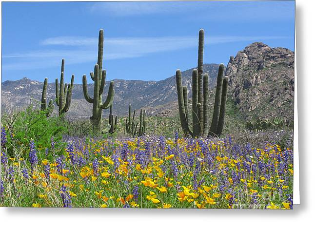 Saguaro Cactus Greeting Cards - Spring flowers in the desert Greeting Card by Elvira Butler
