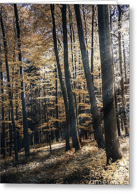 Canvas Pressure Greeting Cards - Spring Forest Greeting Card by Bruno Santoro