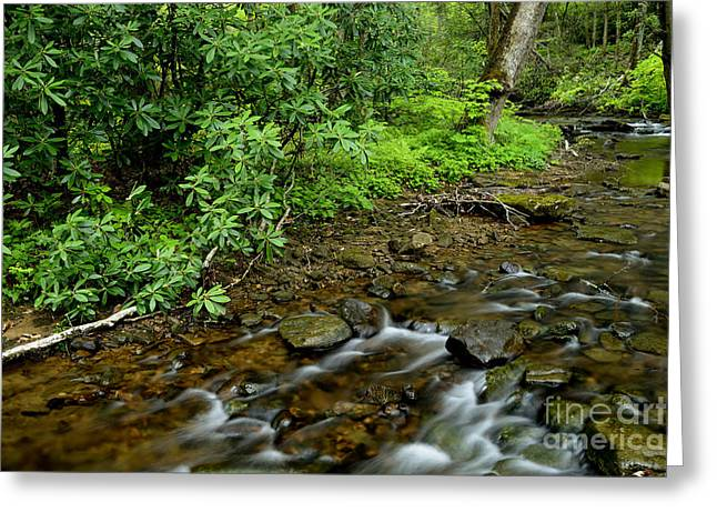 Rushing Stream Greeting Cards - Spring Forest Stream Greeting Card by Thomas R Fletcher