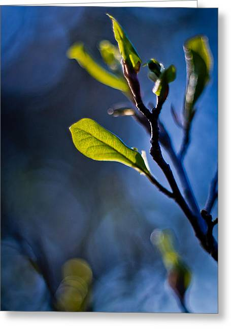 Blue And Green Greeting Cards - Spring Forward Greeting Card by Linda Unger