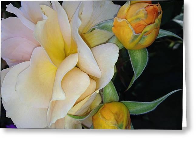 Amen Greeting Cards - Spring Garden Greeting Card by Amina Bentivegna