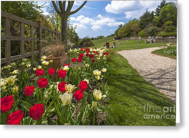 Spring Garden Greeting Card by Donald Davis
