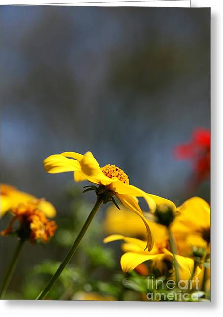 Wildflower Fine Art Greeting Cards - Yellow Spring Garden  Greeting Card by Neal  Eslinger