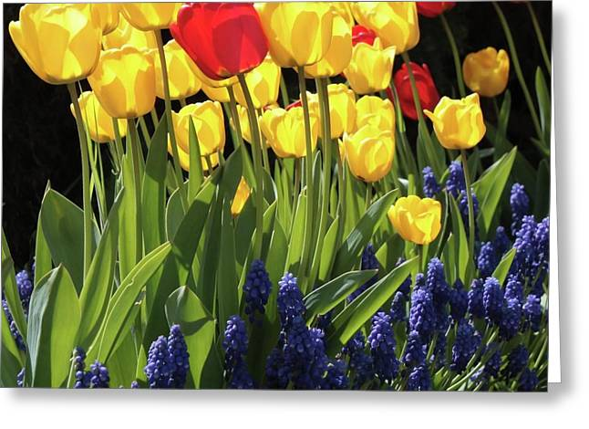 Energize Greeting Cards - Spring Garden Sunshine Square Greeting Card by Carol Groenen