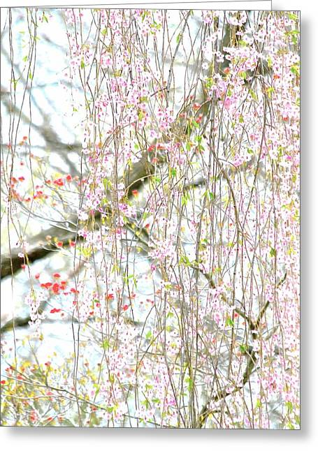 Recently Sold -  - Weeping Greeting Cards - Spring Greeting Card by Gillis Cone
