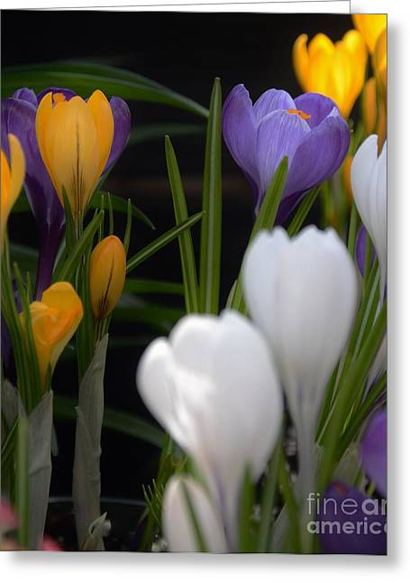 Struckle Greeting Cards - Spring Glow Greeting Card by Kathleen Struckle