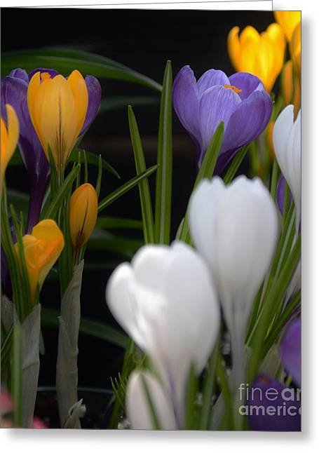 Spring Glow Greeting Card by Kathleen Struckle