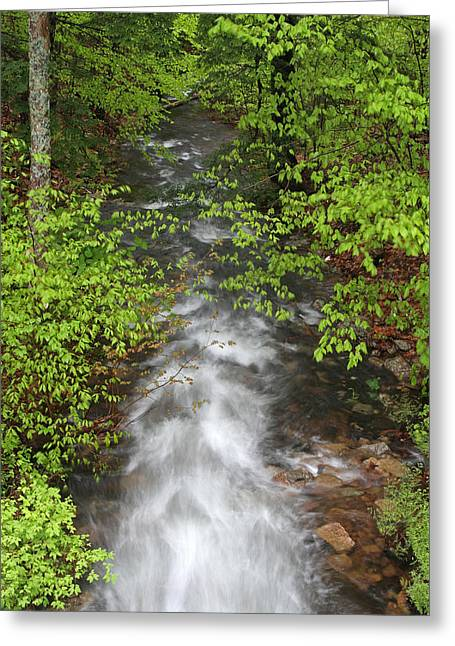Maine Spring Greeting Cards - Spring Green Framing Bubble Brook  Greeting Card by Juergen Roth