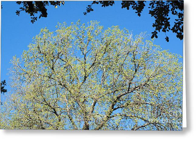 Spring Green Greeting Card by Gary Richards