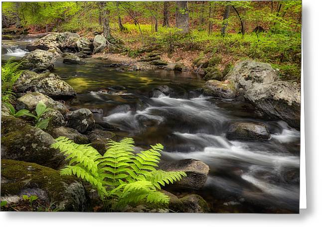 Connecticut Scenery Greeting Cards - Spring Greens Greeting Card by Bill  Wakeley
