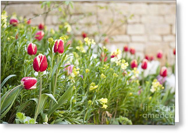 Wallflower Greeting Cards - Spring Has Sprung Greeting Card by Anne Gilbert