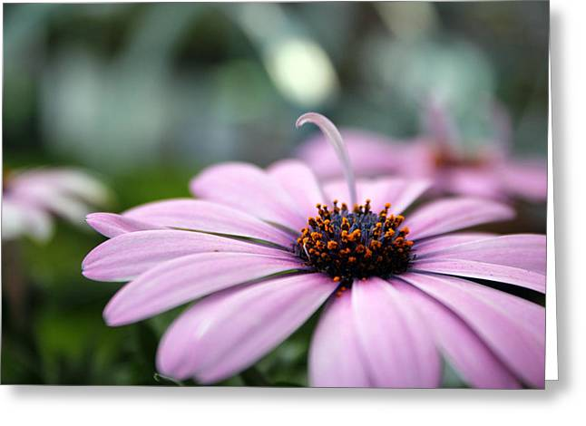 Kelly Photographs Greeting Cards - Spring Has Sprung Greeting Card by Kelly Howe