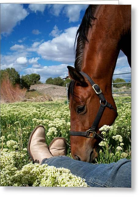Prescott Greeting Cards - Spring Horse Greeting Card by Kasie Morgan