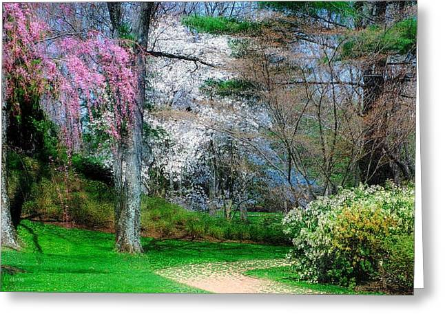 Purchase Greeting Cards - Spring Impressions Greeting Card by Diana Angstadt