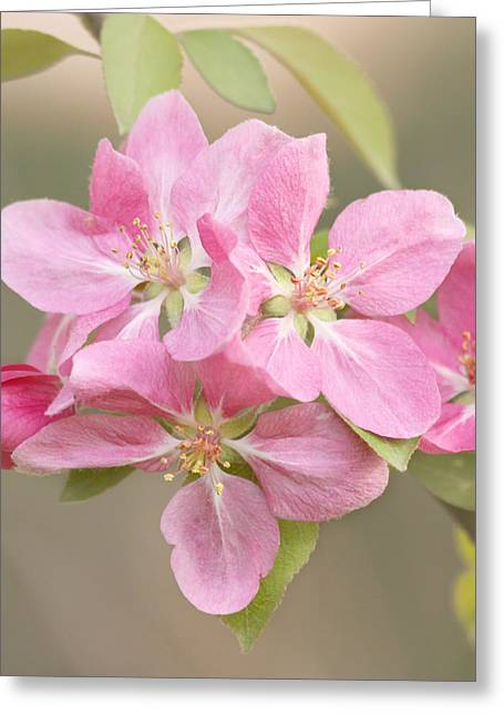 Kim Photographs Greeting Cards - Spring Impressions Greeting Card by Kim Hojnacki