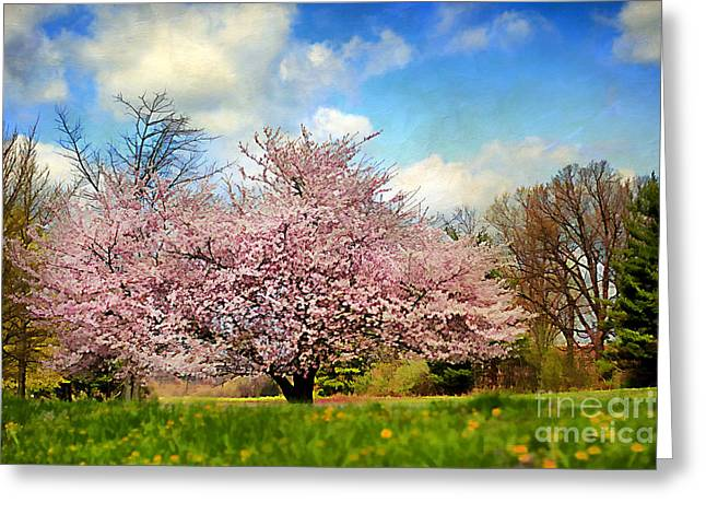 Fruit Tree Art Greeting Cards - Spring in Kentucky Greeting Card by Darren Fisher