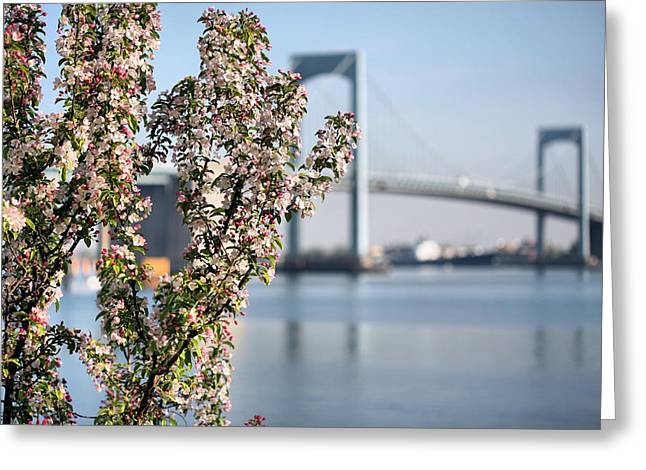 The Bronx Greeting Cards - Spring in Little Bay Park Greeting Card by JC Findley