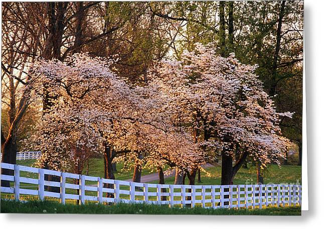 Board Fence Greeting Cards - Spring in the Bluegrass - FS000247 Greeting Card by Daniel Dempster