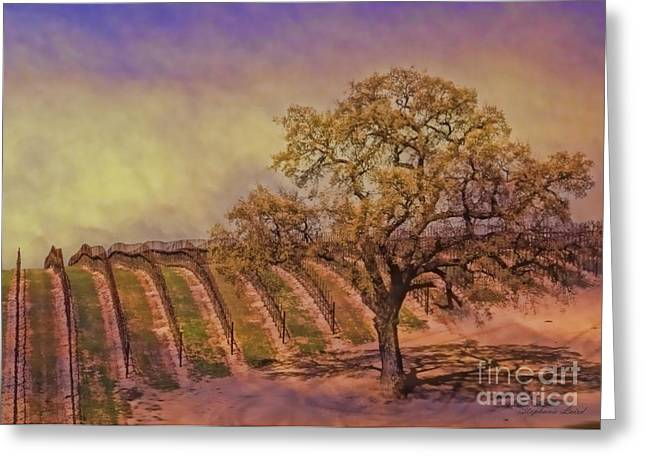 Italian Wine Greeting Cards - Spring in the Vineyard Greeting Card by Stephanie Laird