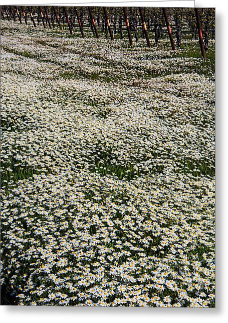 Ground Cover Greeting Cards - Spring in the vineyards Greeting Card by Garry Gay