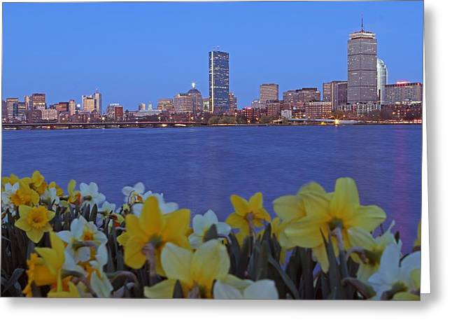 Daffodils Photographs Greeting Cards - Spring into Boston Greeting Card by Juergen Roth