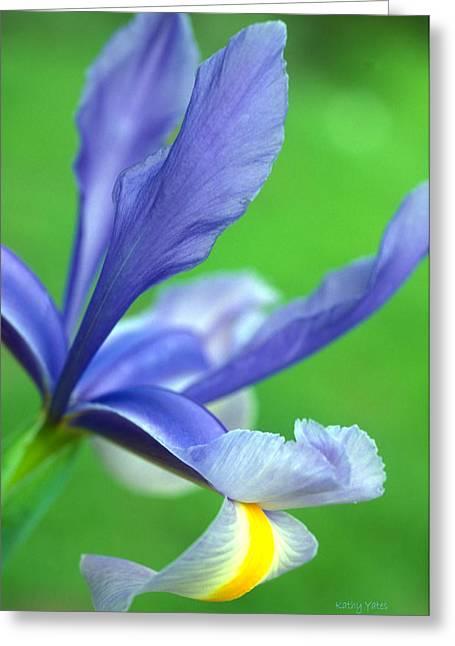 Iris Print Greeting Cards - Spring Iris Greeting Card by Kathy Yates