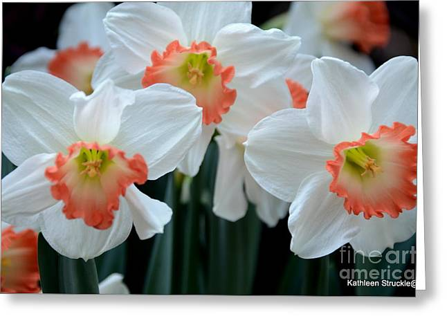 Struckle Greeting Cards - Spring Jonquils Greeting Card by Kathleen Struckle