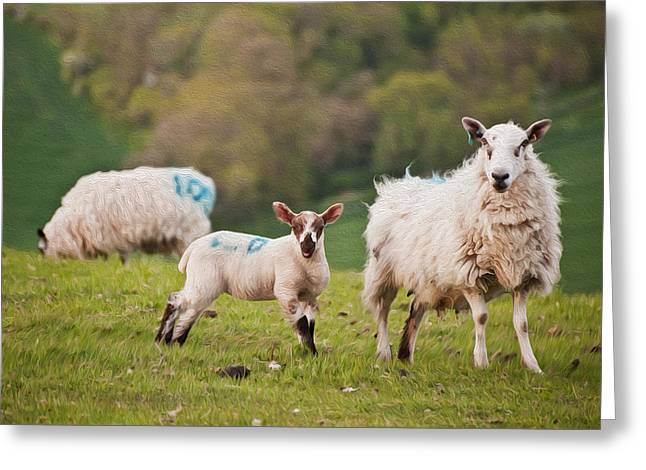 Ovine Greeting Cards - Spring lamb and sheep digital painting Greeting Card by Matthew Gibson