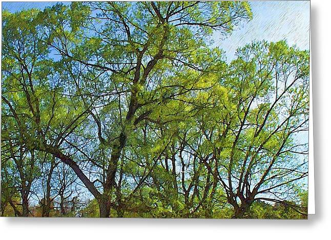 Spring Leaves In The Willows Greeting Card by Joy Nichols