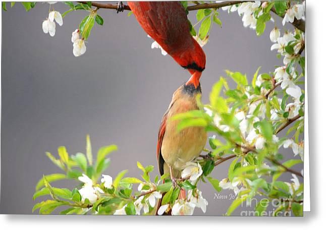 Nava Jo Thompson Greeting Cards - Cardinal Spring Love Greeting Card by Nava  Thompson