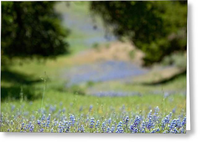 Spring Lupines Greeting Card by Art Block Collections