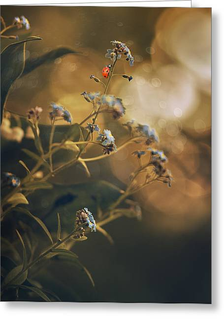 """forget Me Not"" Greeting Cards - Spring  Greeting Card by Magda  Bognar"