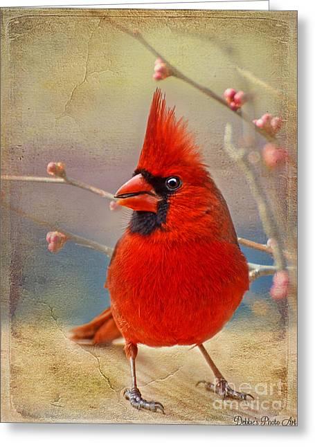 Debbie Portwood Greeting Cards - Spring Male Norther Cardinal Greeting Card by Debbie Portwood