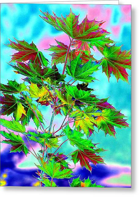 Color Enhanced Greeting Cards - Spring Maple Leaf Design Greeting Card by Will Borden