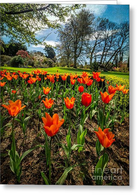 Red Tulips Greeting Cards - Spring Meadow Greeting Card by Adrian Evans