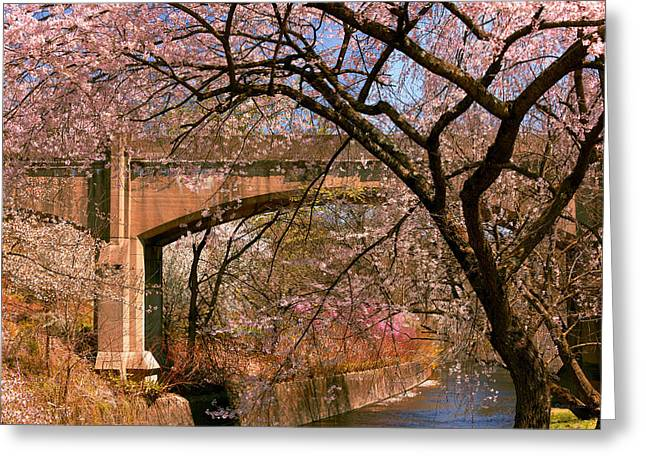 Pink Flower Branch Greeting Cards - Spring - Meet me under the bridge Greeting Card by Mike Savad