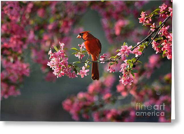Blooms Greeting Cards - Spring Morning Cardinal Greeting Card by Nava  Thompson