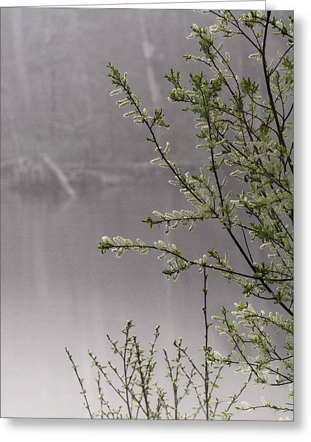 Maine Spring Greeting Cards - Spring Morning Fog Greeting Card by Susan Capuano